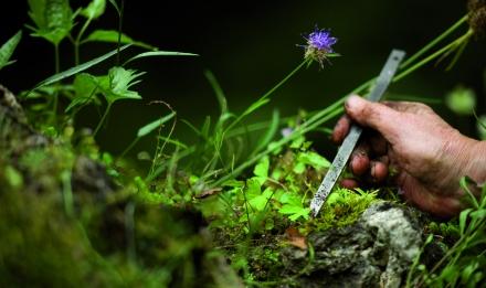 Botanique niveau 1.jpg