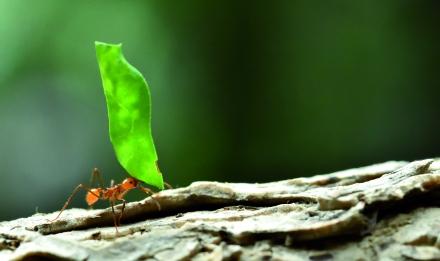 Société et biodiversité.jpg