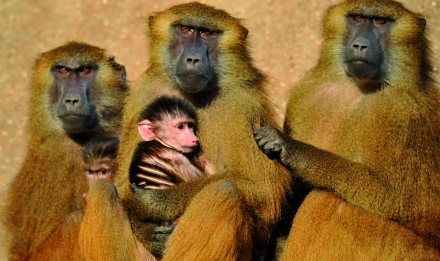 primatologie 1.jpg
